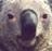 福熊 的照片